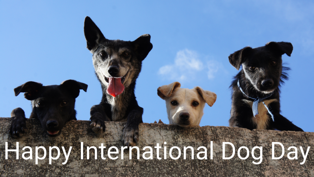 4 canine comapanions for international dog day