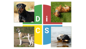 The DISC Styles of dogs